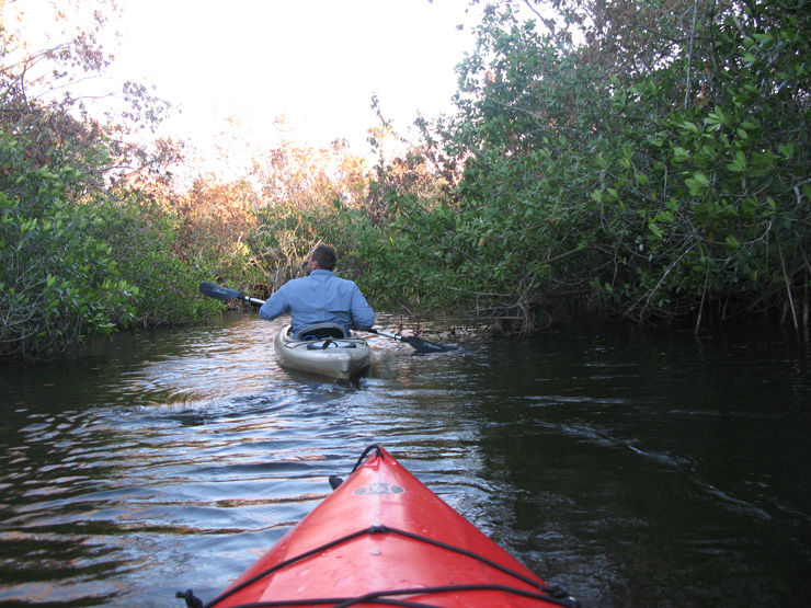 Everglades kayak s