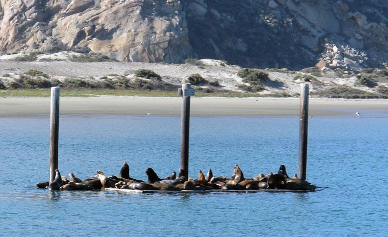 sea lions s