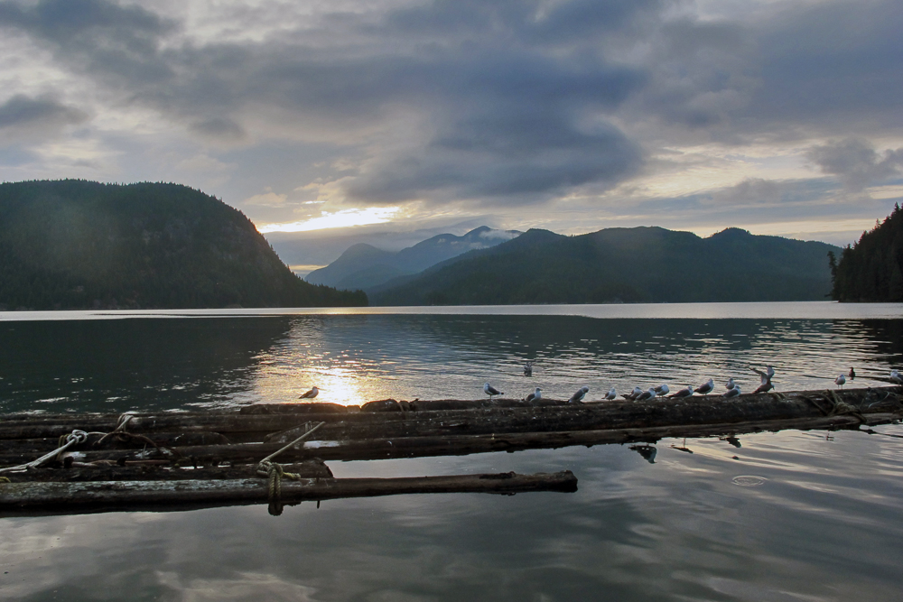 sunset at the lodge Gone Fishin' Knight Inlet BC