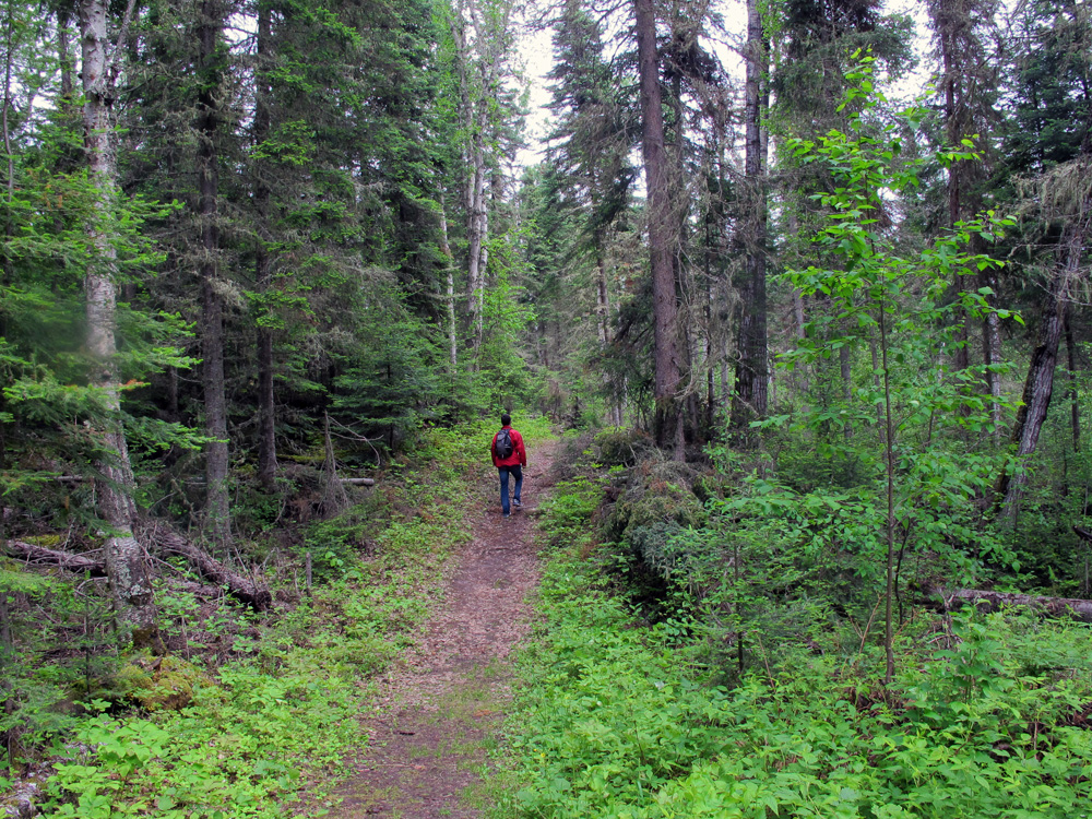 hiker in deep forest In Search of a Legend - Grey Owl