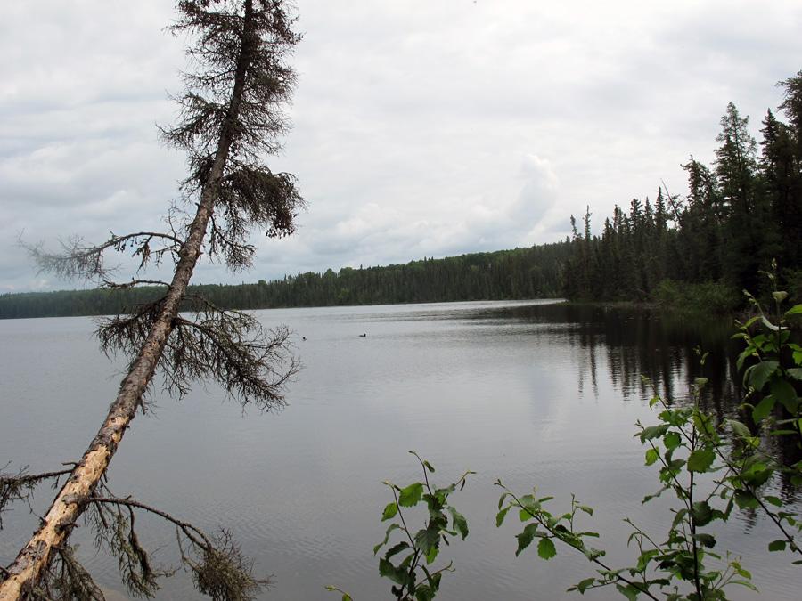 lone pine tree overlooks Lake Ajawaan