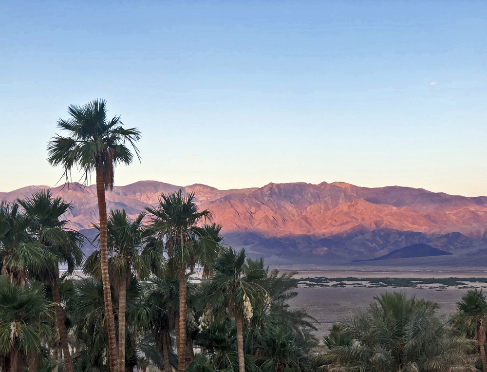 pink dawn lights the mountain range with palm trees in foreground