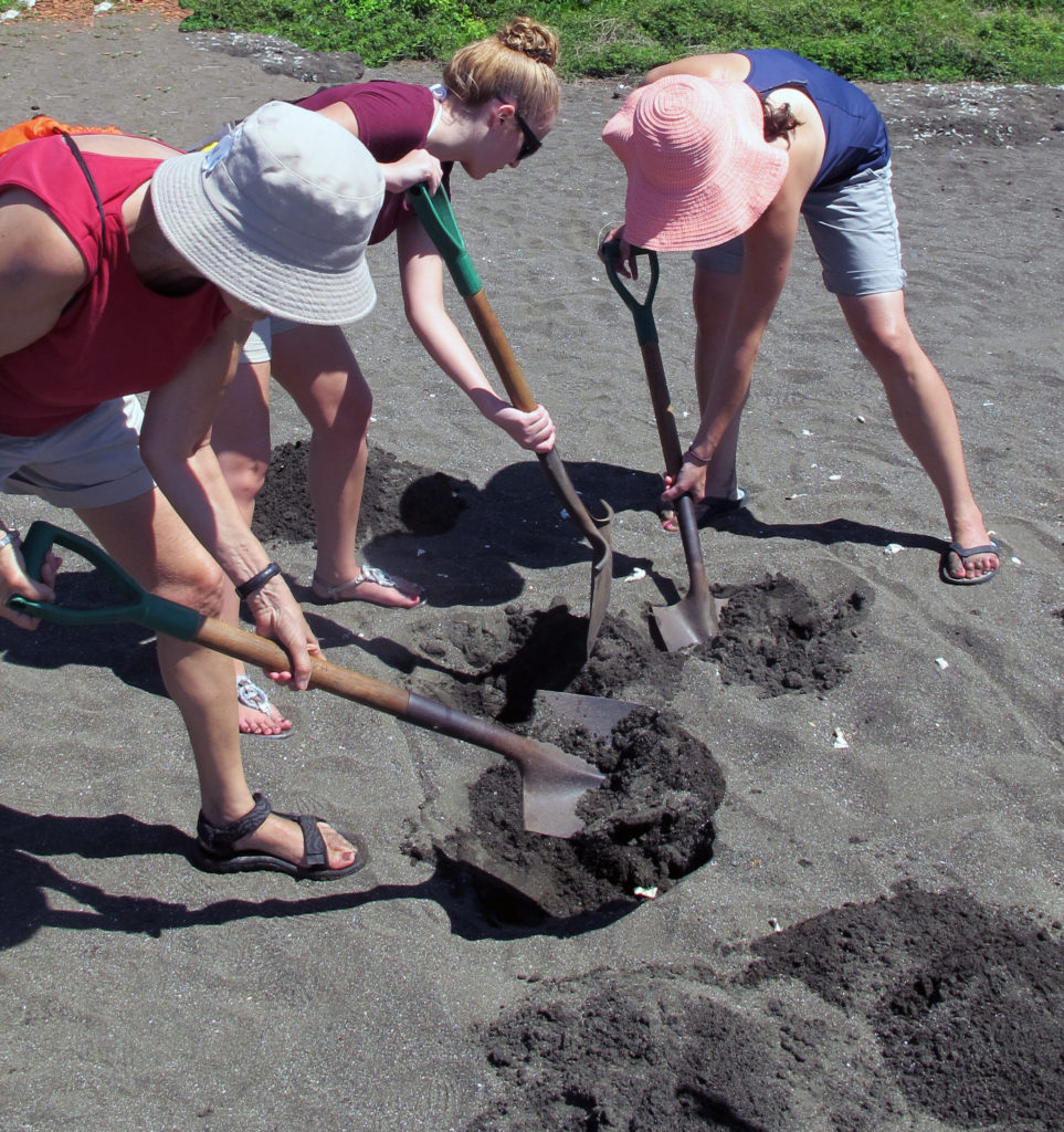 Three people with hats digging in the sand with large shovels