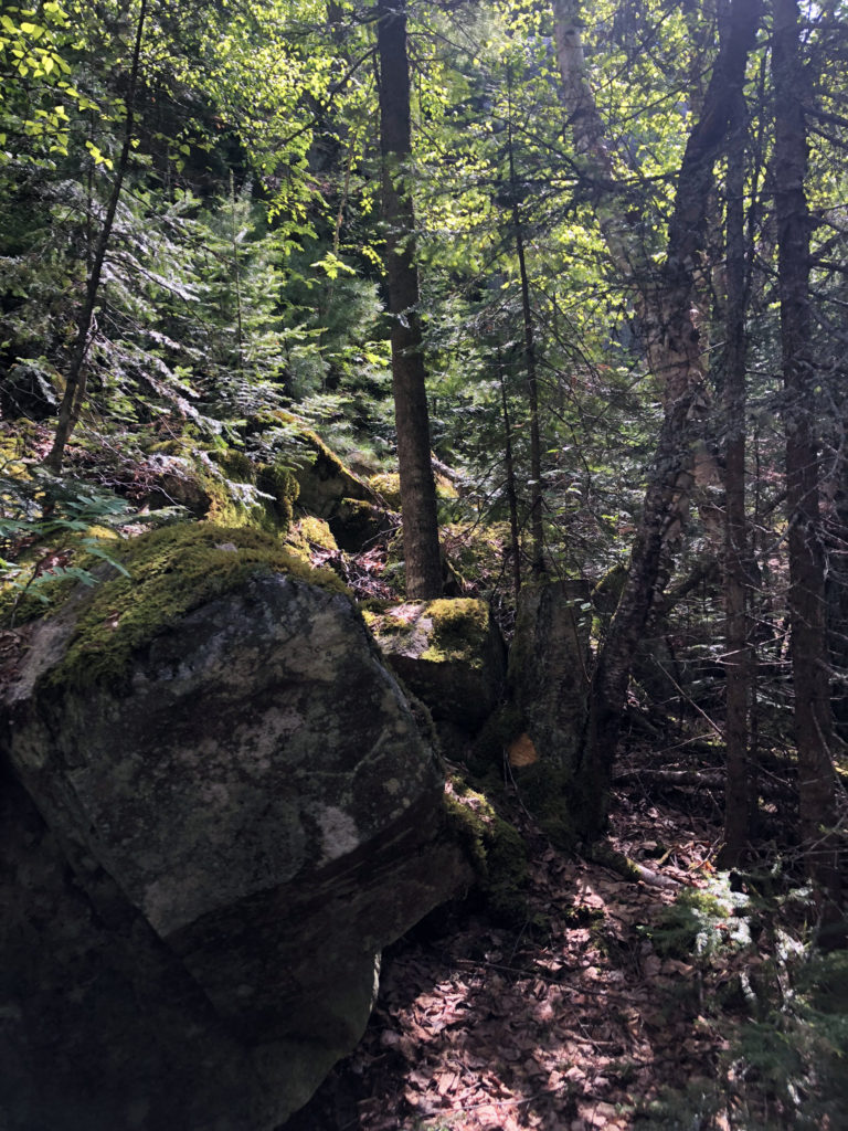 a tangled forest trail with large rocks in the foreground