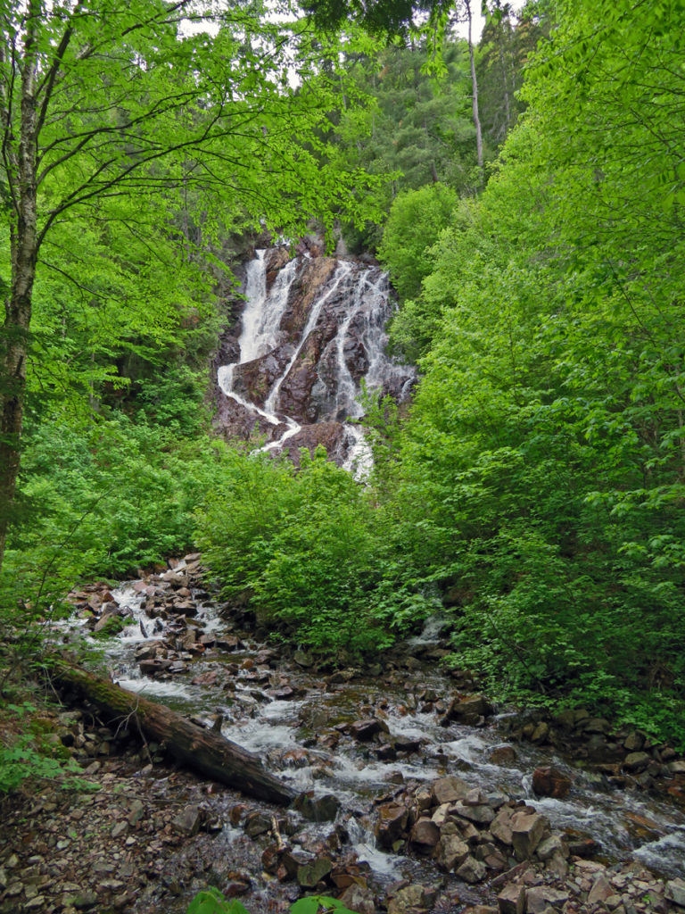 Small waterfalls running down rocks amid bright green foliage with a strem in the foreground into which the falls empty